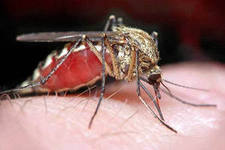 Электронные отпугиватели – идеальное средство защиты от комаров
