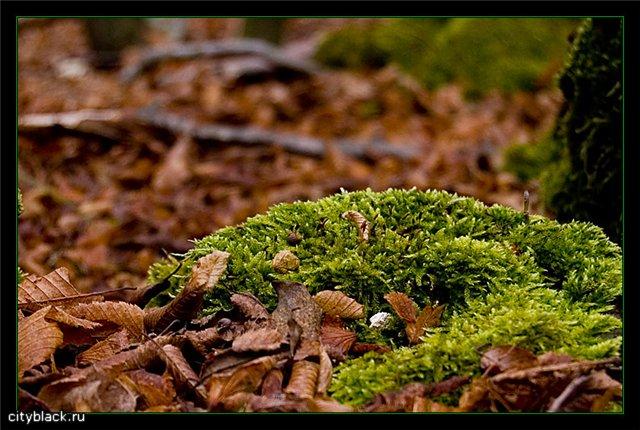 Сухие листья или что значит жизнь?