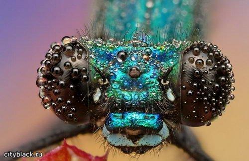 МакроМир насекомых