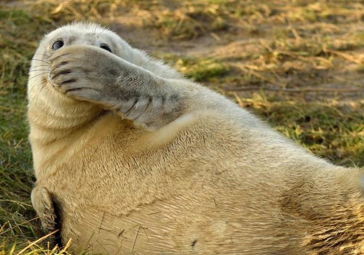 Веселые животные, которые вас рассмешат